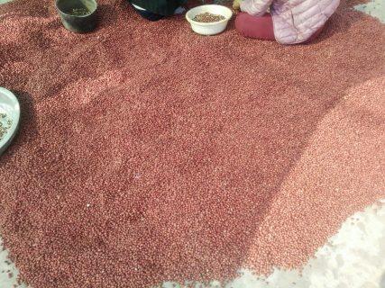 Lạc đỏ hải an sản phẩm đặc hữu